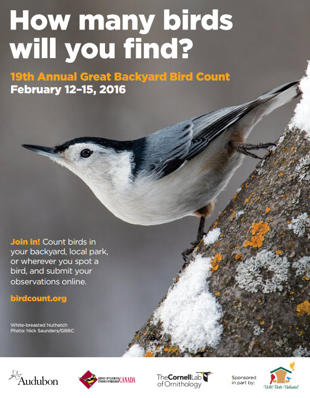 Great Backyard Bird Count 2016