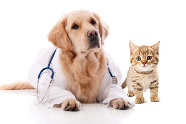Project Hope pet vaccination